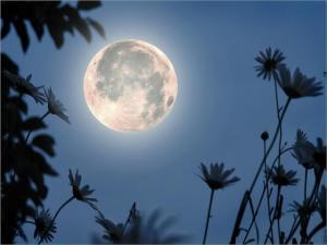 луна середины лета_2