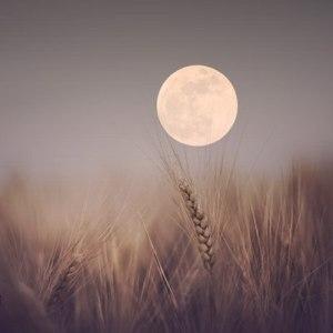 луна урожая_4