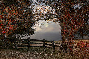 луна опадающих листьев_1